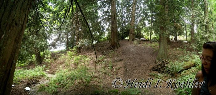 2014-07-22-s2-053-our-ravine-looking-West-pano by 12monthsOFwinter