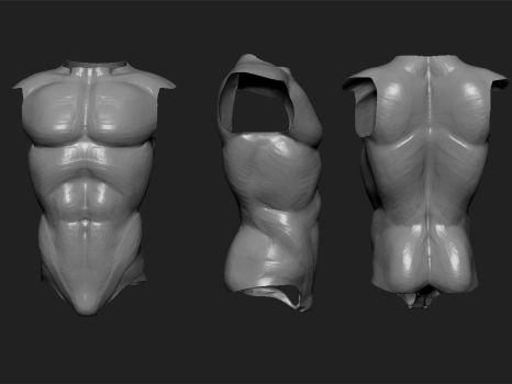 male torso study by Ahmed-Taher
