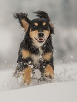 Timi running in the snow by luka567