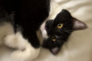 Lulu on the bed IV by Ennev