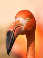 Flamingo in the Sun by papatheo