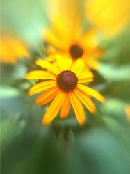 Lensbaby iPhoneography CCLXXXIV by LDFranklin