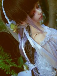 Dreamed Forest 6 by Pandora-Desdemona