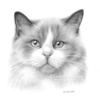 Cat pencil drawing by Kot-Filemon