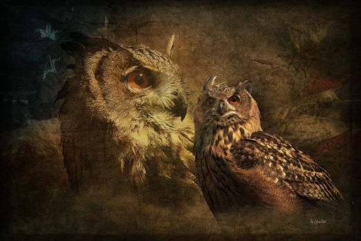 Eagle owl by greenfeed