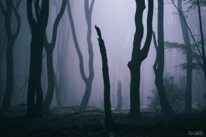Voodoo Woods by tvurk
