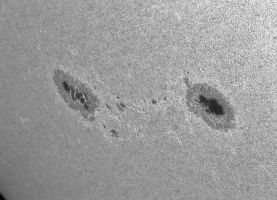 Two new sunspots continue  (Aug31) by giovannigabrieli