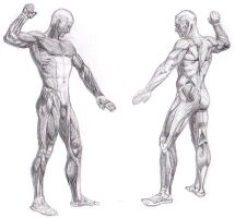 Full body muscle system by rrog