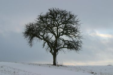 Tree in the snow 2 by archaeopteryx-stocks