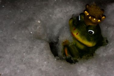 Frog in the Snow by ChristophMaier