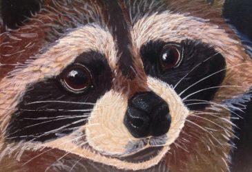 ACEO: Cute Raccoon by DanielleMWilliams