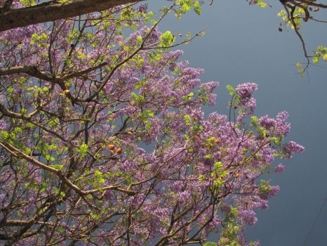 Flowers in the Sky III by Calcobrinus