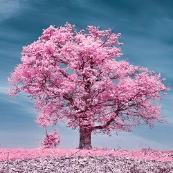 Infrared colors by mugurelm