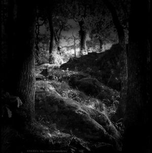 Dark Fairytale by serel