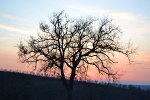 tree and sunset by RDK94