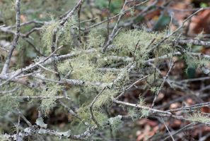Lichen Forest by DracoFlameus