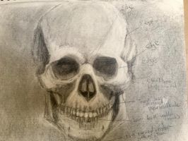 Skull study (frontal) by LyndasDaughter