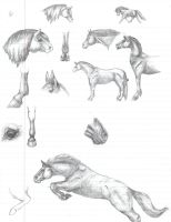 Equine Study - sketch sump by Rodeo-rogue