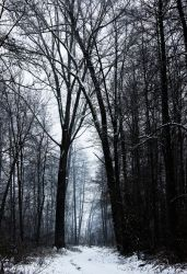 Winter Path by Caillean-Photography