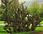 Roots by GlassHouse-1