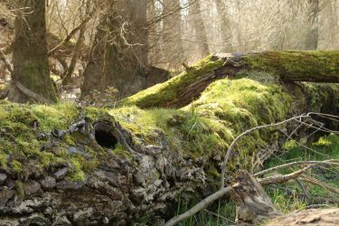 Mossy log Stock 05 by Malleni-Stock