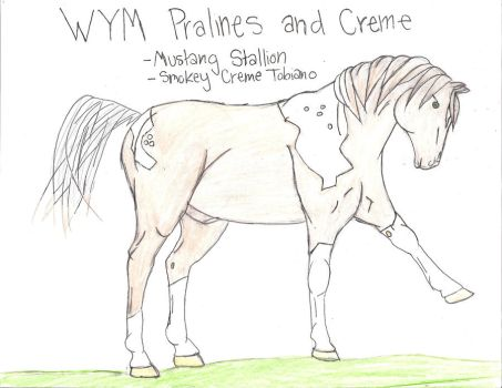 WYM Pralines and Creme FOR SALE by EbonyDreams