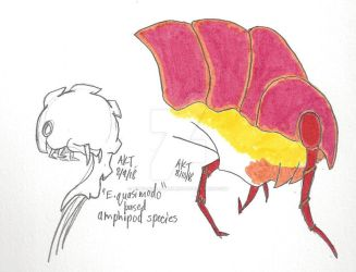 Amphipod Spins by Paws-for-a-Moment