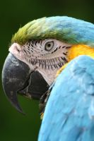 Parrot by MAGIAINCANTO