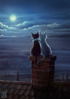 Just two cats on a roof by jerry8448