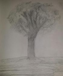 :.My Tree Sketch.: by Princ3ssWolfi3