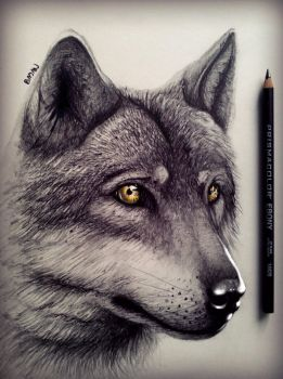 Wolf drawing by Bajan-Art