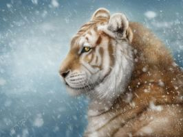 Winter tiger by AlenaEkaterinburg