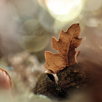 Autumn Love. by OliviaMichalski