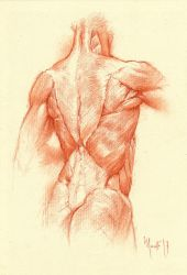 Anatomy study BS by SILENTJUSTICE