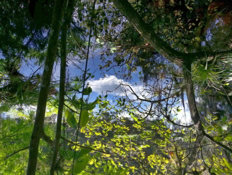 Woods Upside Down by MikeKiniry