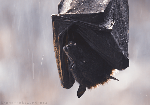 Shelter from the rain by MonsterBrand