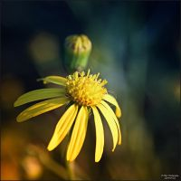 Natures Revival 069 by Frank-Beer