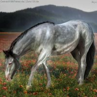 HEE || Horse Avatar | In the Poppies by skystream11