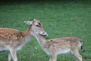 Mother and Young by NIAB-Photography