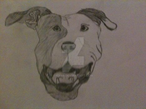 Pit Bull Terrier by ICE46