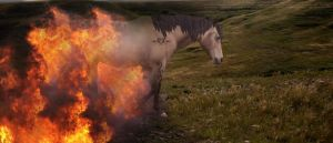 Birthed of Flame by silverthorne-studios