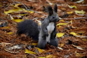 Squirrel by angra1811