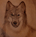 Wolf (Better quality) by Whitewolff89