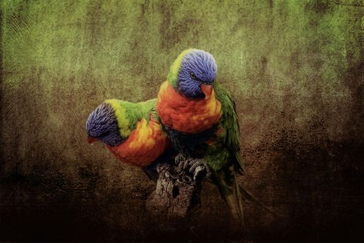 Birds in paradise - Lorikeets by CouchyCreature
