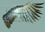 2015BCwings by DeniseWorisch