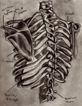 Rib Cage Back view by thevictor2225