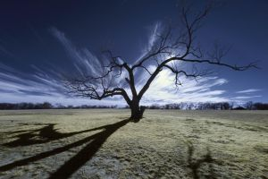 Winter Mequite by rylstone
