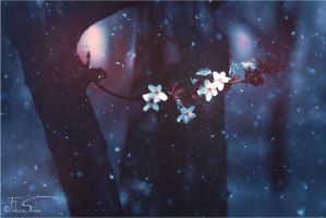 A Cherry Winter - Wallpaper by iNeedChemicalX