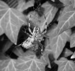 spider 2 by Gramophone