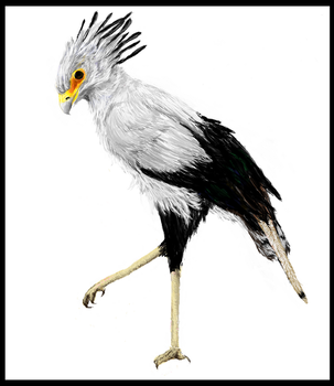 Secretary Bird by dancingfoxbird